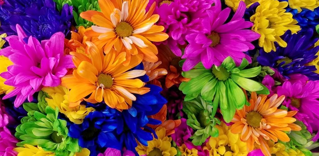 5 fascinujúcich faktov o chryzantémach